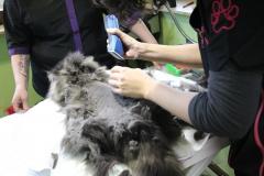 professionelle Katzenpflege und Katzenschur